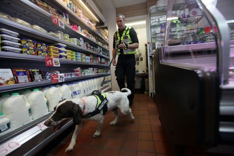 Super sniffer dog brought in to hunt out Tyneside's illegal tobbaco - ChronicleLive | Dog News | Scoop.it