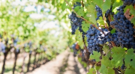 Vers un Grand Cru des Costières de Nîmes | Le Vin et + encore | Scoop.it