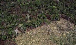 Indigenous rights are key to preserving forests, climate change study finds | Lorraine's Sustainable Biomes (NSW) (including Food security) | Scoop.it