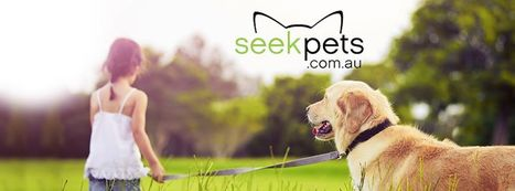 Main Factors To Consider When Purchasing A Puppy Online | Pets - Buy Pets Online | Scoop.it