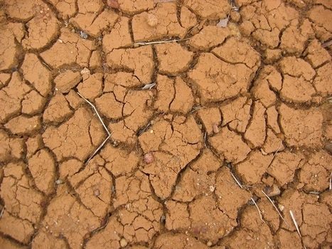 Global Warming Affects Soil Microbe Survival: Changing Climate Impacts Farming | Climate Change | Scoop.it