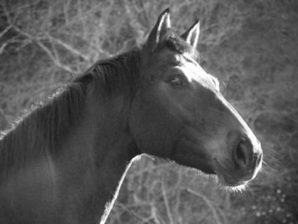 Amour des chevaux, éthologie, respect de la nature | éthologie équine | Scoop.it