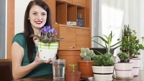 Piante da appartamento | Coltivare l'orto | Scoop.it