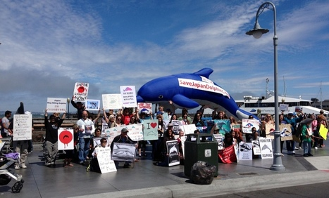 Blog: Biggest Japan Dolphins Day Yet! | Ric O'Barry's Dolphin Project | Animal rights | Scoop.it