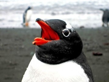 Google's Penguin 2.0 Update Is Now Live | Real SEO | Scoop.it