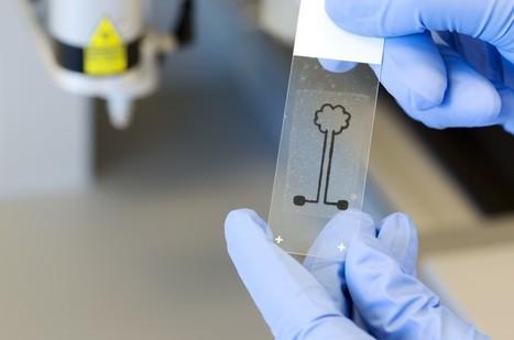 Impression 3D : de la cellulose comme encre - Sciences et Avenir | calligraphie | Scoop.it
