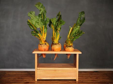BeetBox, la boîte à rythmes 100% végétale   Vegactu - végétarien, végétalien et végan   Scoop.it
