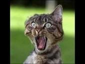 Pourquoi mon chat miaule ? - Blog animaux zoomalia.com | PETS & ANIMAUX | Scoop.it