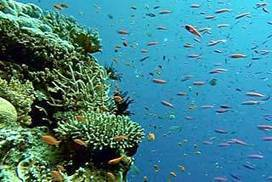 Will we have to limit coal exports to guarantee the protection of the Great Barrier Reef? | Geographical issues | Scoop.it