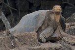 Nous vivons la 6ème extinction massive de l'histoire de notre planète, la seule à ne pas être naturelle | Ecologie Animale | Scoop.it