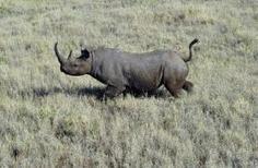 Un permis de chasser un rhinocéros de Namibie aux enchères au Texas   Tourisme et chasse   Scoop.it