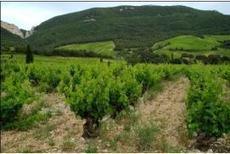 VVH 86086 : nouveau produit pour le développement d'une alternative aux herbicides de synthèse , Actualités générales - Pleinchamp | Quels potentiels pour le zéro-herbicide? | Scoop.it