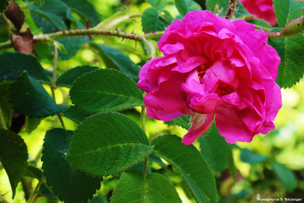 Les roses de Kelaat El M'Gouna | Ecotourisme au Maroc | Scoop.it