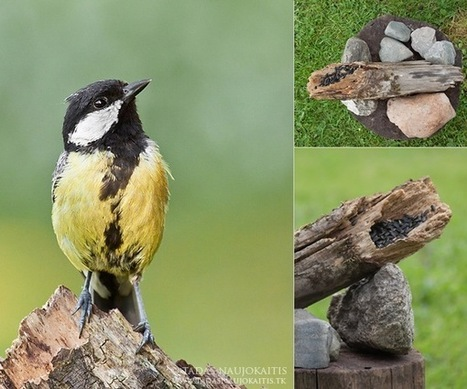 Bird Photography Near Feeders - Digital Photography School | Travel With Your Camera | Scoop.it
