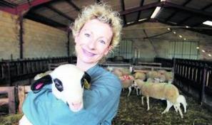 L'agneau du Quercy : lunettes noires et toison blanche, c'est la star du Lot   Autour de Carennac et Magnagues   Scoop.it