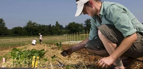 Le bio peut-il nourrir le monde ? | Shabba's news | Scoop.it