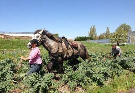 Barbezieux (Charente) : l'homme qui cultive le bio à l'aide de chevaux | Images et infos du monde viticole | Scoop.it