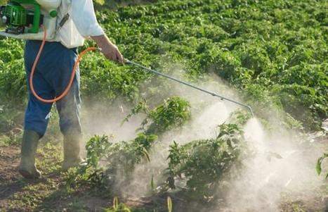 Pesticides : Les sénateurs dénoncent des risques sous-évalués - Doctissimo   Abeilles, intoxications et informations   Scoop.it