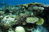 #CoralReef Back From the #Dead ~ | Rescue our Ocean's & it's species from Man's Pollution! | Scoop.it