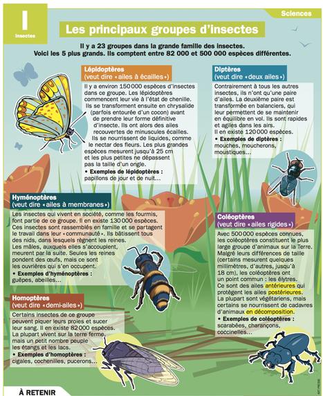 Mon Quotidien - Le seul site quotidien d'information pour les 10-14 ans ! | Presse francophone | Scoop.it