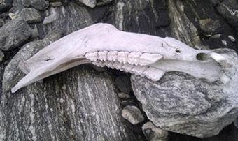 Iron age horse found as Norway glacier melts | Histoire et Archéologie | Scoop.it