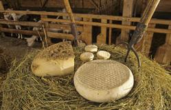 Des fromages sur un plateau - Auvergne Vacances (Haute Loire) | Le Tourisme en Haute-Loire | Scoop.it