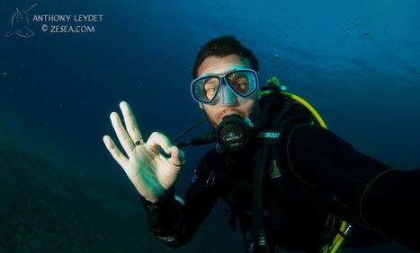 Plonger seul : pour ou contre ?   La plongée sous-marine   Scoop.it