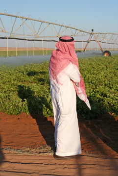 Sustainable Irrigation in UAE | Water Board | Scoop.it