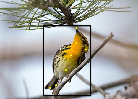 Merlin Bird Photo ID, conoce que especie de pájaro es con solo una fotografía | GeeksRoom | Bichos en Clase | Scoop.it