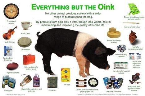 Products from animals | Technology: Plant and Animal Use | Scoop.it