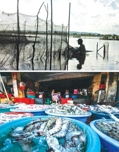 Seafood and suffering | mb.com.ph | Philippine News | Global Aquaculture News & Events | Scoop.it