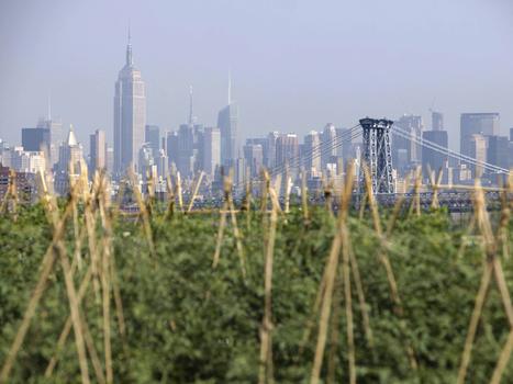 Rooftop farms: The future of agriculture? | De mogelijkheden van onze daken | Scoop.it