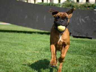 K9 Katelynn Dog Training   Anthem Dog Training   Scoop.it