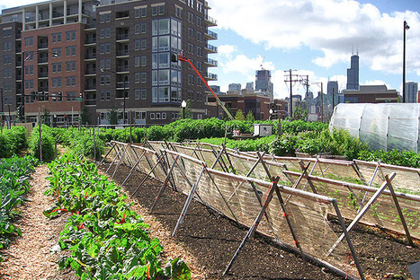 Urban Agriculture Can't Feed Us, but That Doesn't Mean It's a Bad Idea | Aquaculture | Scoop.it