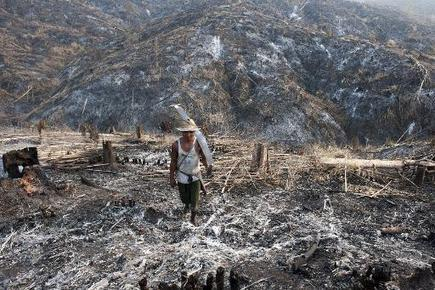 Extinction stalks Myanmar's forests | Sustain Our Earth | Scoop.it