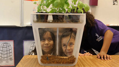Fish Poo Power: A Genius Countertop Aquaponics Garden | Sustainable Futures | Scoop.it