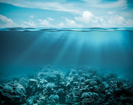 Baby fish will be lost at sea in acidified oceans | All about water, the oceans, environmental issues | Scoop.it