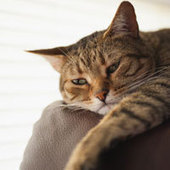 Cats Don't Actually Ignore Us  : DNews | Cats' behavior and maintenance. | Scoop.it