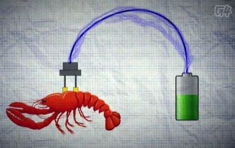 Bio medical applications to extract power from Cyborg Lobsters ... | shubush augment | Scoop.it