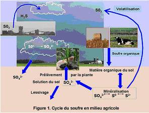 Le soufre en agriculture, comment corriger une carence en soufre   Agriculture Nouvelle   Agriculture et Développement   Scoop.it