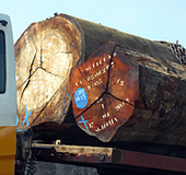 Japanese firms importing illegal Russian timber | Timberland Investment | Scoop.it