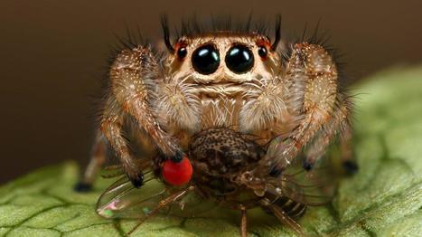Veinte arañas cuquis que harán que olvides tu aracnofobia. Fotogalerías de Tecnología | Reflejos | Scoop.it