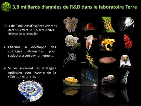 Le biomimétisme : transition vers une seconde Renaissance ? | EntomoScience | Scoop.it