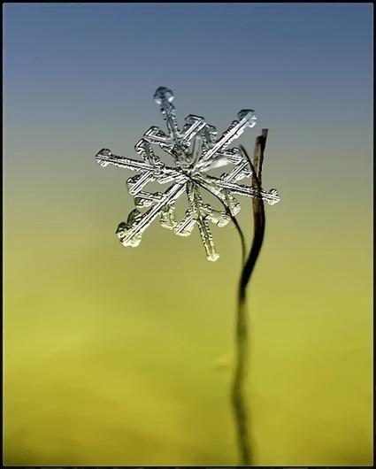 Beautiful Macro Shots Of Snowflakes - | Prionomy | Scoop.it