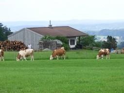 En Allemagne: la Bavière booste la bio | Allemagne Commerce et Industrie | Scoop.it