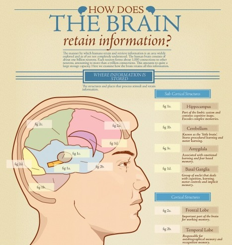 Comment le cerveau retient l'information ? ★ Websourcing.fr | infographies | Scoop.it