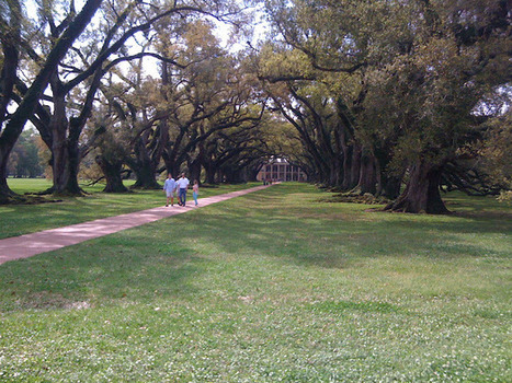 Shower Wisdom: Tour of Oak Alley | Oak Alley Plantation: Things to see! | Scoop.it