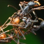 Ants Build Complex Structures With a Few Simple Rules | Simons Foundation | Complexity | Scoop.it