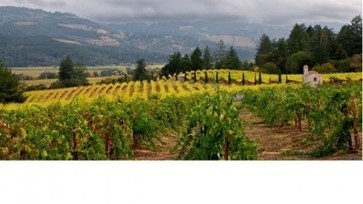 Napa Valley to replant up to 15% of vineyards | Vitabella Wine Daily Gossip | Scoop.it