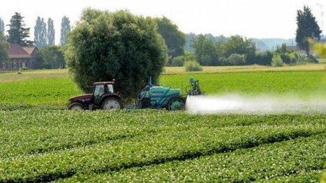 Pesticides dans les vignes : la cour d'appel demande une expertise médicale dans l'affaire Bibeyran – justice - France 3 Aquitaine | Sainte-Hélène de la Lande Médoquine 33480 scooped by Raymond PIOMBINO | Scoop.it